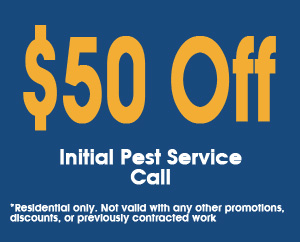 50-off-Pest-Service-Coupon