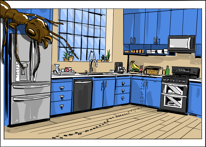 Ant Infestation In Kitchen Cabinets   Wow Blog