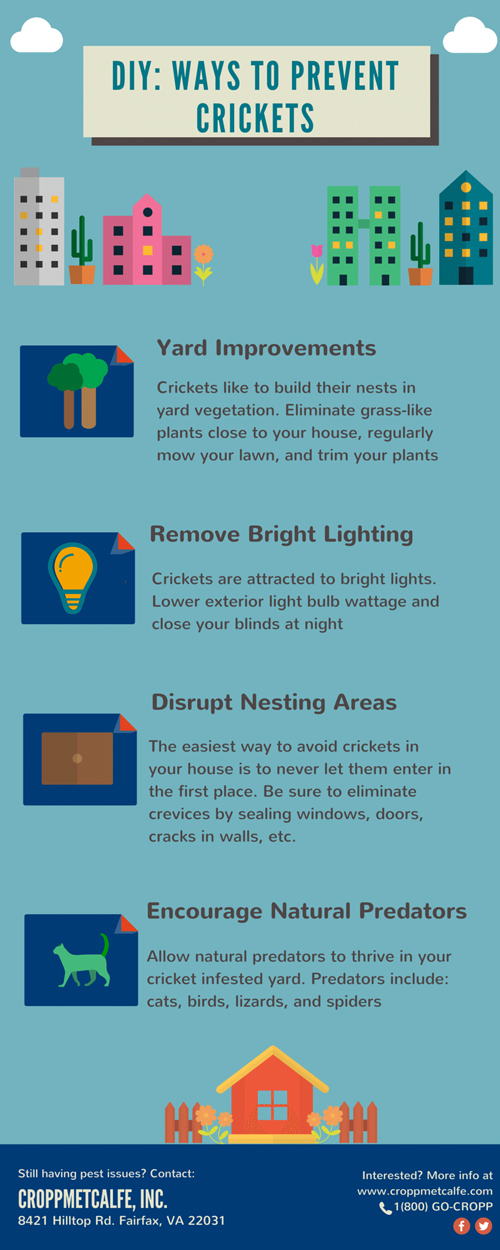 DIY-CM-Cricket-Prevention-Infographic