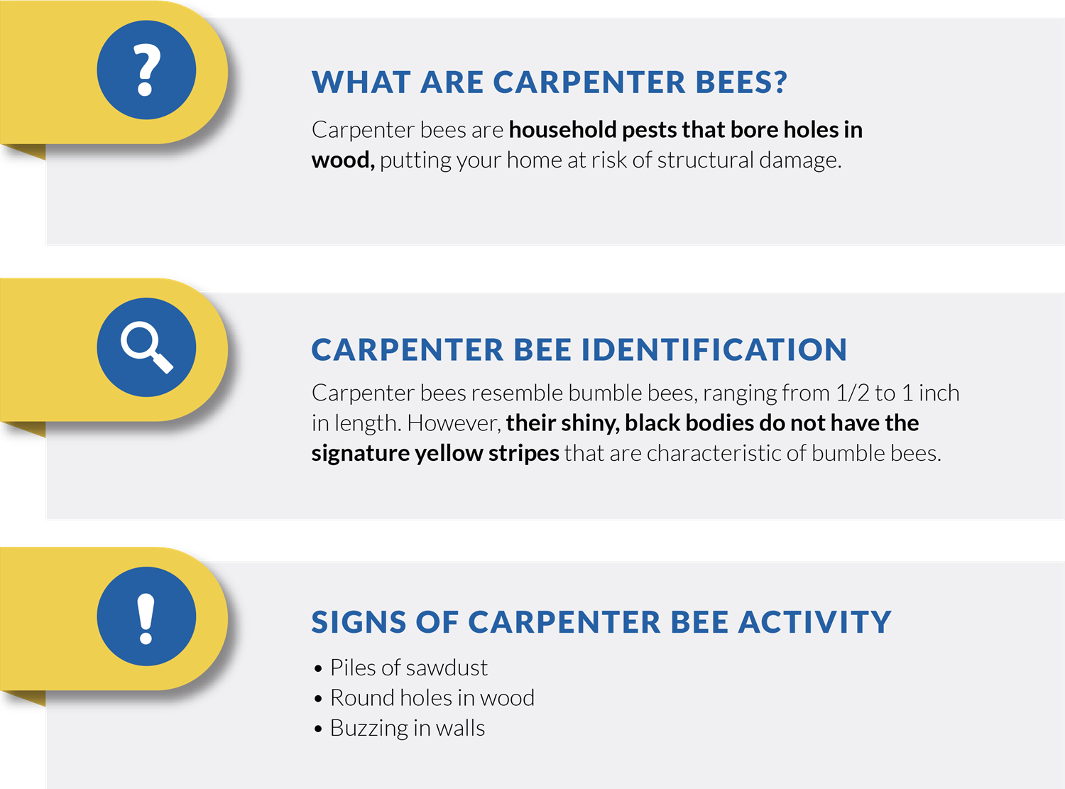 carpenter bee infographic