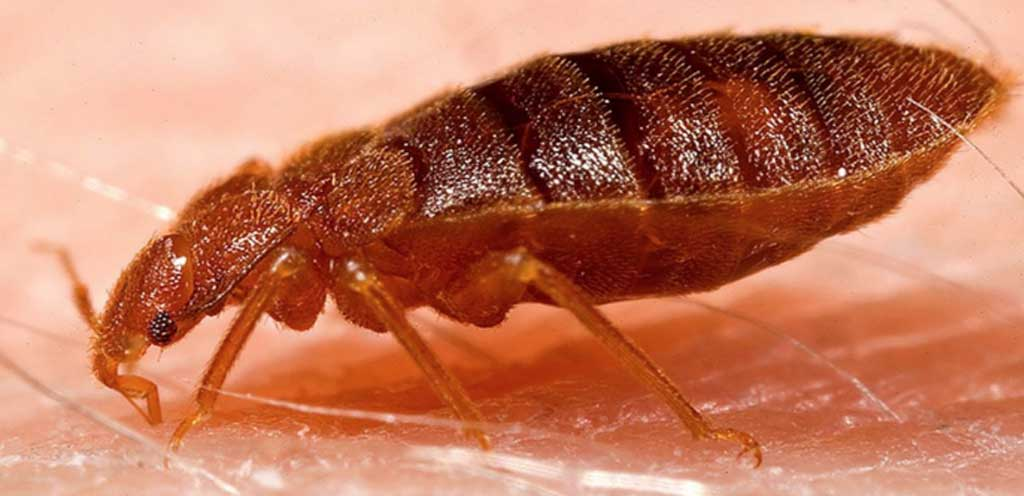 bed-bug-treatment-and-prevention
