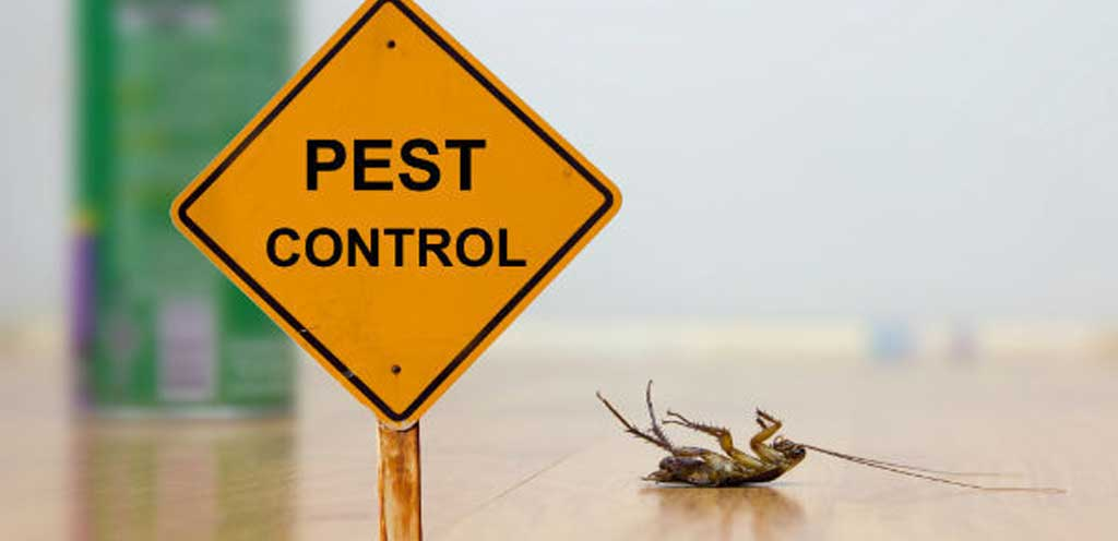 commercial-pest-control-services