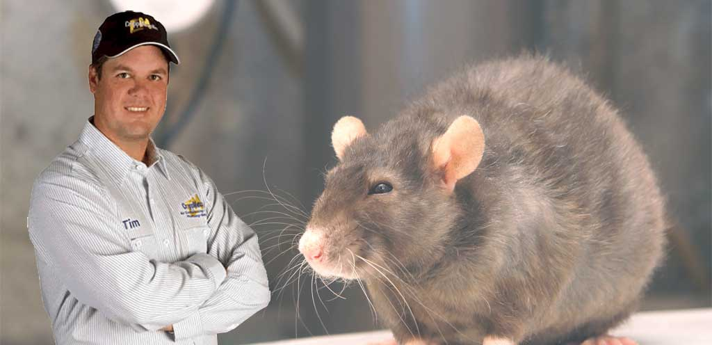 rodent-and-wildlife-prevention-and-removal